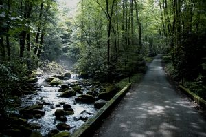 roaring fork motor trail and river in the smoky mountains